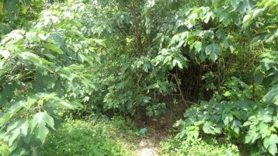 Vết tích được cho là cổng hang chứa kho báu một thời trong rừng