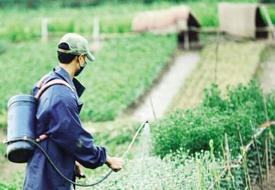Một trong những nguyên tắc được coi như rất quan trọng trong vấn đề bảo vệ thực vật là hạn chế sử dụng thuốc bảo vệ thực vật